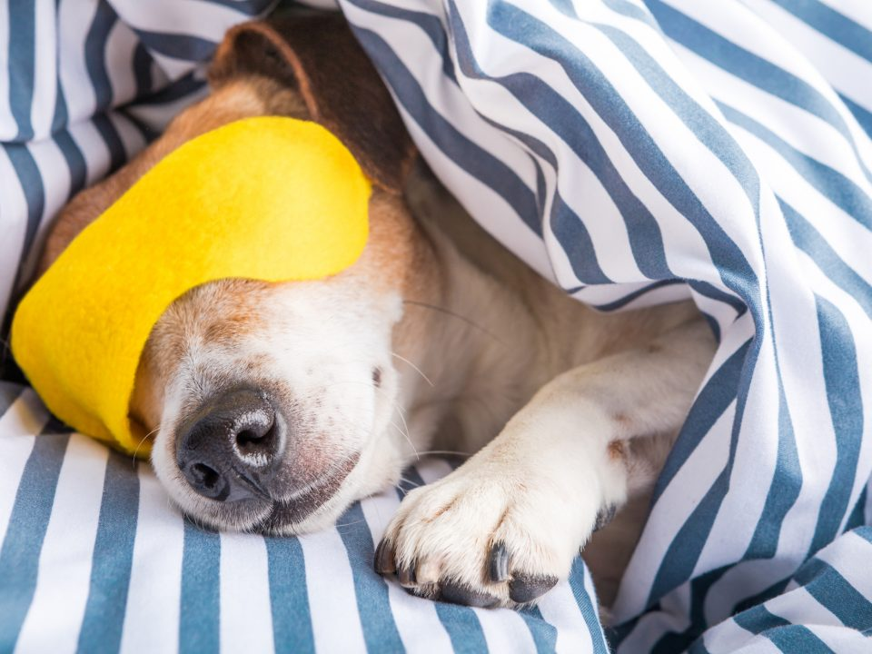 mattress-store-in-cumming-dog-nap